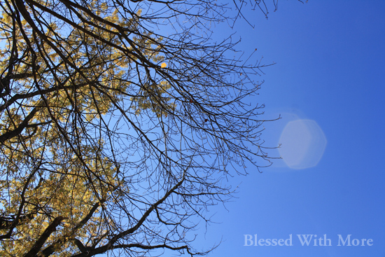 ForestHill_Sky_2013_IMG_4526